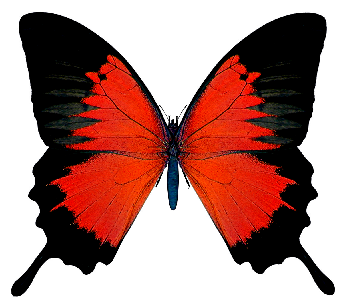 Black_and_Red_Butterfly_PNG_Picture